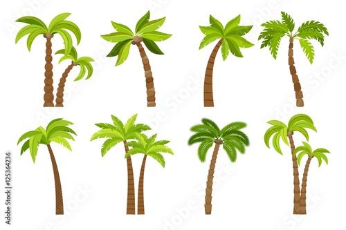 Palm trees isolated on white background Fototapeta