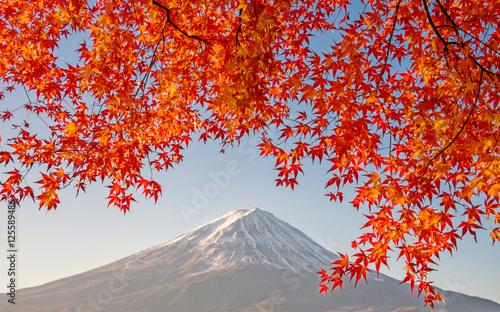 Mount Fuji with beautiful color red maple ( Momiji) at lake Kawaguchiko, Japan.