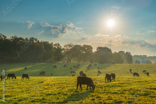 Fotomural Grazing Cows