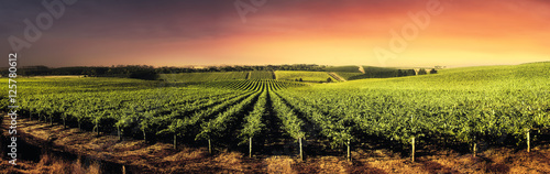 Fotografia Stunning Sunset Vines