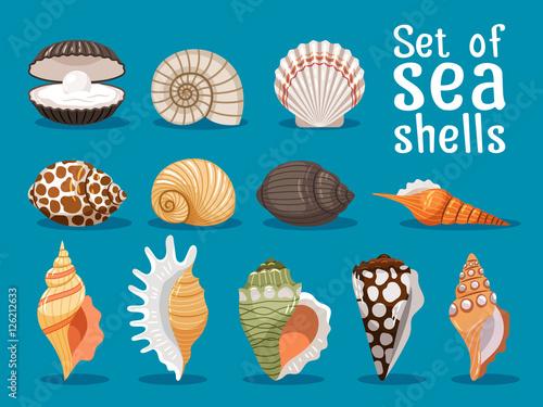 Fotografie, Obraz Sea shells isolated on blue background