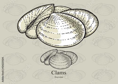 Vászonkép Clams
