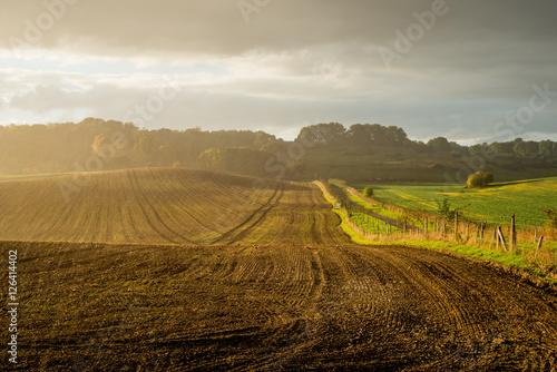 Photo Sunlight on Wide Field