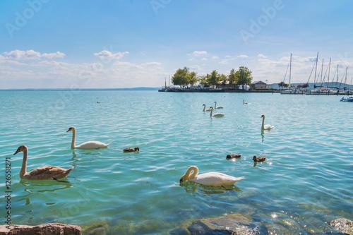 Fotografie, Obraz Port of Balatonfured and Lake Balaton with swans, Hungary