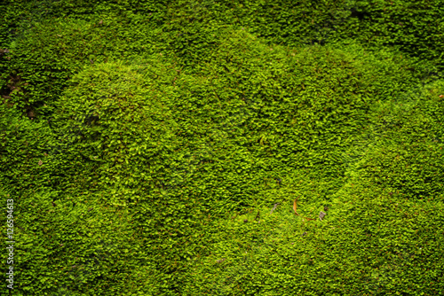 Photo Green moss in nature