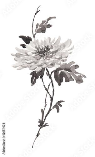 Billede på lærred Ink illustration of flower, blooming chrysanthemum in monochrome