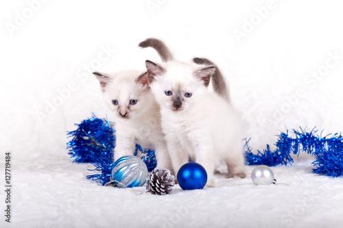 Fototapeta Siamese kittens with Christmas balls