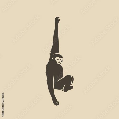 Valokuva Gibbon