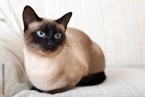 nice young cat Fototapeta