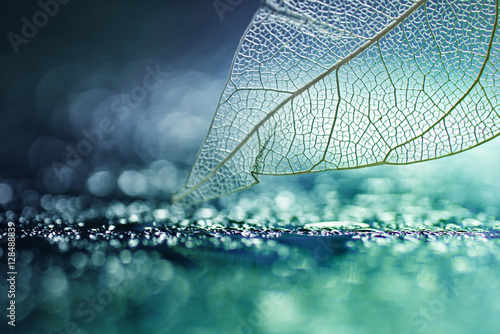 White transparent skeleton leaf with beautiful texture on a turquoise abstract background on glass with shiny water dew drops and circular bokeh close-up macro. Bright expressive artistic image.