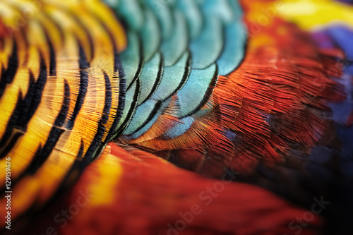 Photo Beautiful abstract background consisting of golden pheasant