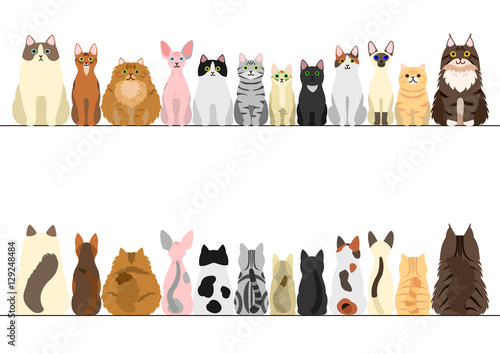 Fotografia cats border set, front view and rear view