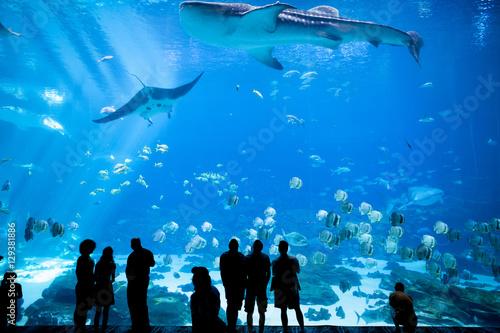 Slika na platnu Aquarium in Atlanta, Georgia