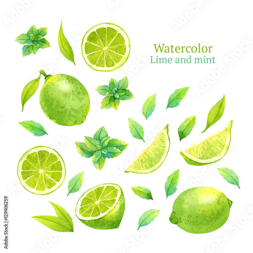 Stampa su Tela Watercolor vector lime and mint
