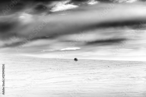 Single tree, snow covered hill and cloudscape, Finland, black and white