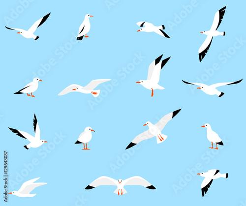 Photo Vector set of beautiful seagulls.
