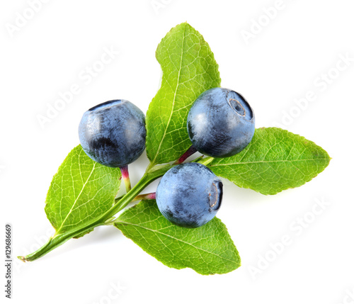 Fotografia Blueberry branch isolated on white background