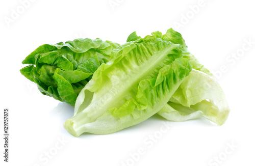 fresh baby cos lettuce on white background