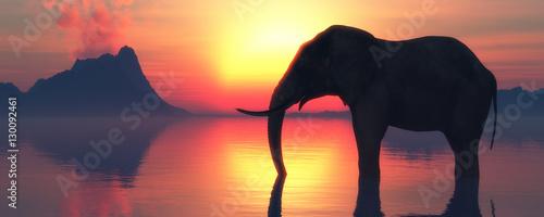 Canvas Print elephant and sunset