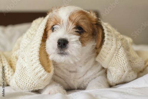 Fotografia Funny Puppy Dog Covered with Warm Knitted Sweater