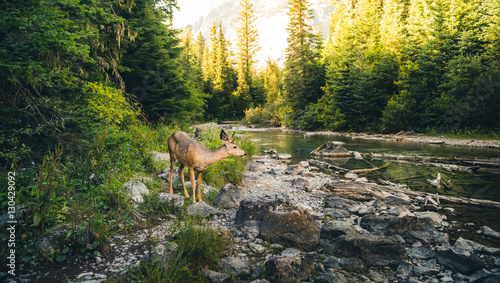Lone deer by a river.