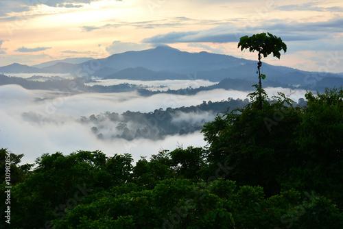 Canvas Print Primary rainforest sunrise scenery in Danum Valley, Sabah Borneo, Malaysia