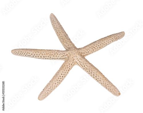 starfish on white background