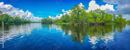 Fotografie, Obraz Louisiana Swamp