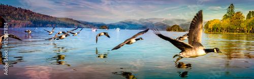 Obraz na płótnie Flock of Ducks flying low at Lake Windermere