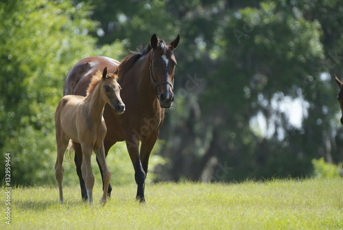 Foto Beautiful horse mare and foal in green farm field pasture equine industry