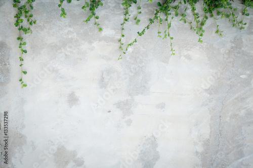 Fényképezés Concrete wall with ornamental plants or ivy or garden tree.
