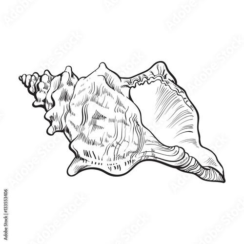 Spirale Conch Sea Shell, skizzieren Stil Vektor-Illustration isoliert auf weißem Hintergrund Fototapete