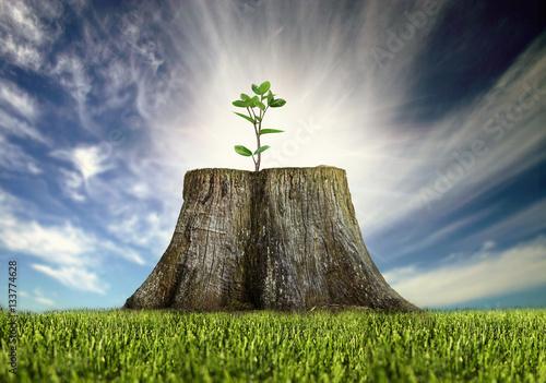 Fotografia renewal, young tree growing on a tree stump