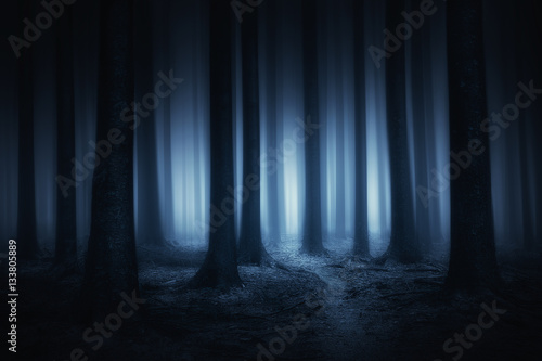 dark and scary forest at night Fototapete