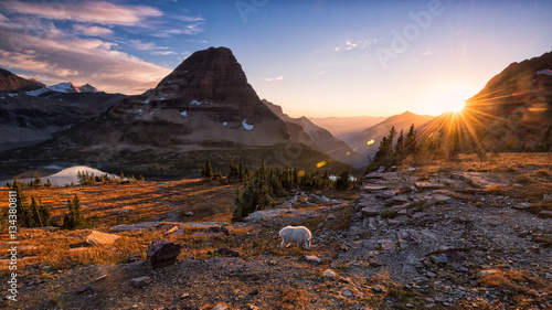 Fotografie, Obraz Mountain goat and setting sun in Glacier National Park