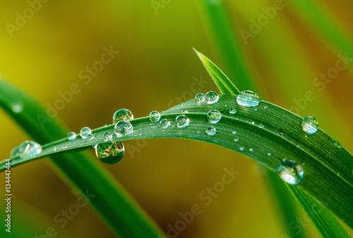 Stampa su Tela Grops of dew on grass
