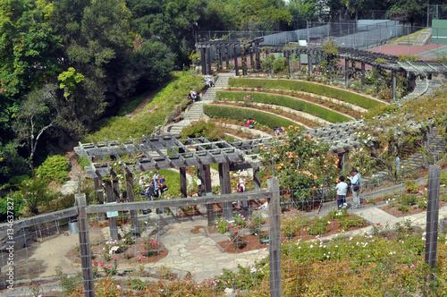 Fototapeta Rose Garden