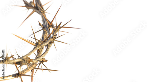Foto crown of thorns on white background