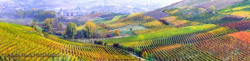 Fotografia amazing vast plantation of grape in Piemonte- famous vine region of Italy