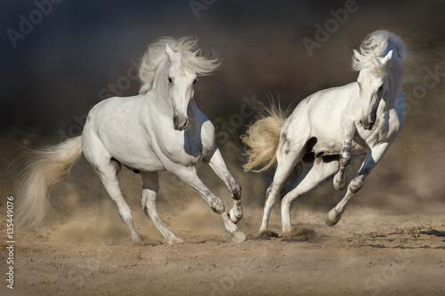 Cople horse in motion in desert  against dramatic dark background