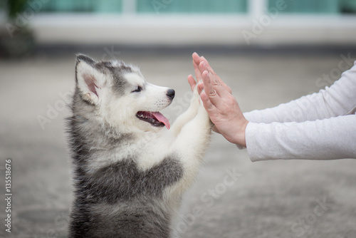 Canvas Print Puppy pressing his paw against a Girl hand