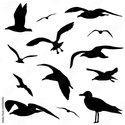 Canvas Print Seagull silhouette set isolated on white background vector