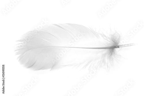 Fototapeta Ptasie pióro na białym tle XL