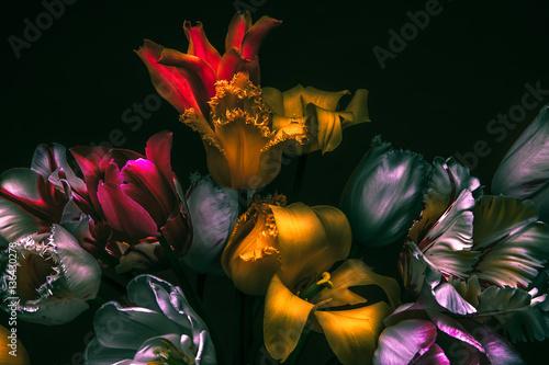 Dark colors in the dark. Tulips rare variety.