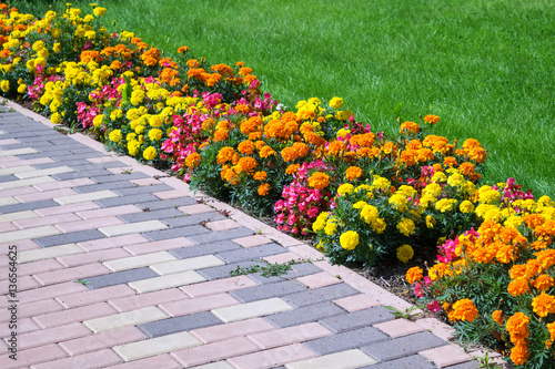 Flowerbed of different colors arranged along the edge of the green lawn and walkway of pavers Fototapeta