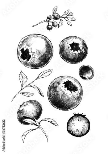 Fotografija Image of bilberry