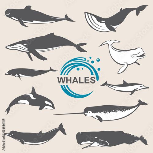 collection of various whales species images Tapéta, Fotótapéta
