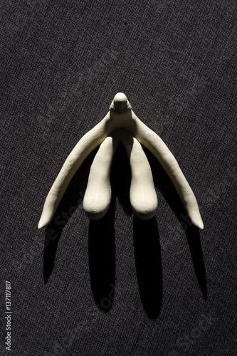 Naklejki na drzwi Drukowana w 3D łechtaczka żeńskich organów płciowych na lekcje anatomii człowieka