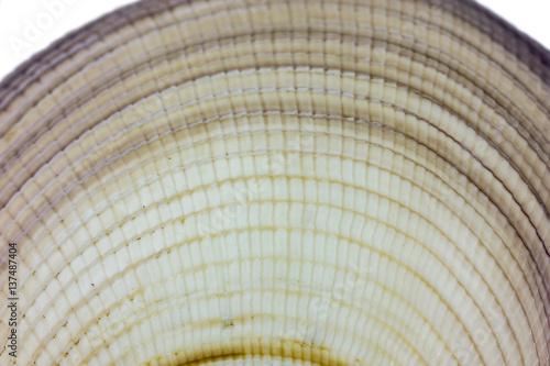 Sea shell - detail
