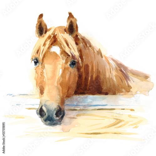 Koń akwarela w stabilnej ręcznie malowane ilustracja